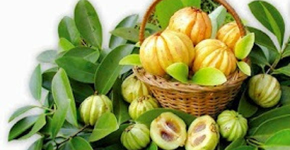 garcinia_cambogia-φρούτο