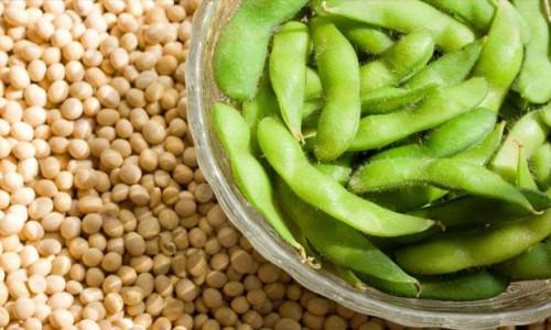 soya-health-fitness-greece