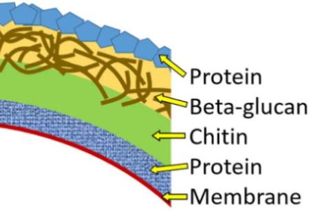 b-glykanes-kyttariki-domi